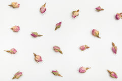 Pink rose flower buds close up on white paper Stock Photography