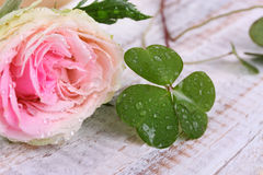 Pink rose flower and clover leaf Stock Image