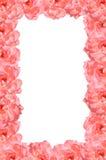 Pink rose flower frame Royalty Free Stock Photos