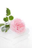 Pink rose - flower isolated on white background Royalty Free Stock Photo