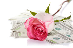 Pink rose flower and money. Pink rose. Pink flower. Rose and dollars. Dollars. Flowers and money. Expensive flower. Expensive gift Royalty Free Stock Image