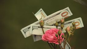 Pink rose flower money dollar nobody. Day light stock video footage
