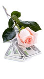 Pink rose flower and money Stock Photo