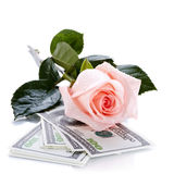 Pink rose flower and money Royalty Free Stock Photos