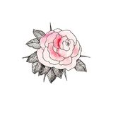 Pink Rose 3 Stock Images