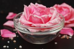Pink Rose Flower in Soft Color, selective focus, Spa and Beauty Concept Black Background Copy space. Pink flower and Relax Salt. Pink Rose Flower in Soft Color royalty free stock photography