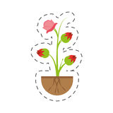 Pink rose flower sprout grow. Illustration eps 10 Stock Photos