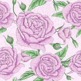 Pink rose flower. Thais is illustration of flower pattern Royalty Free Stock Images