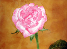 Pink rose flower painting vintage style Royalty Free Stock Photography