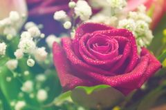 Pink rose flower with waterdrops in bouquet. Colorful background.  stock image
