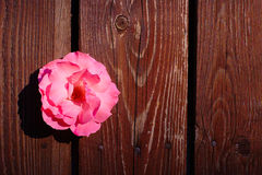 Pink Rose Flower On Wooden Background Stock Photo