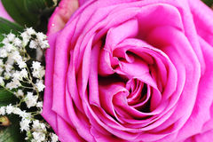 Pink rose and  flowers Stock Photography