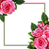 Pink rose flowers arrangement and a frame Royalty Free Stock Photo