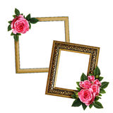 Pink rose flowers arrangement on frames Stock Images