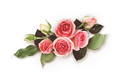 Pink rose flowers arrangement. On white background. Filtered version. Top view. Flat lay stock photo