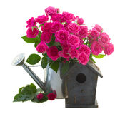 Pink rose flowers with birdhouse. Pink rose flowers in watering can isolated on white background royalty free stock images