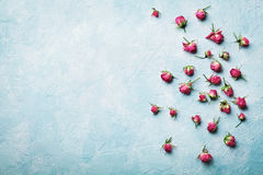 Pink rose flowers on blue vintage table top view in flat lay style. Pink rose flowers on blue vintage table top view in flat lay style Royalty Free Stock Image