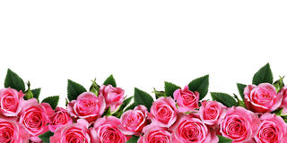Free Pink Rose Flowers Border Royalty Free Stock Photography - 92384947