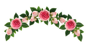 Pink rose flowers and buds arch arrangement. Isolated on white. Flat lay, top view stock photography