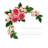Pink rose flowers and buds corner arrangement Royalty Free Stock Photography