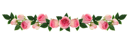 Pink rose flowers and buds line arrangement. Isolated on white. Flat lay, top view royalty free stock photo