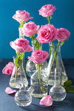 Pink rose flowers in chemical flasks over blue Stock Images