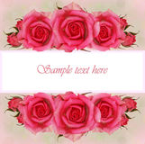 Pink rose flowers composition for greeting card Stock Photos