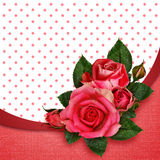 Pink rose flowers composition Stock Photo