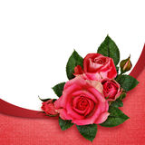 Pink rose flowers composition Stock Images