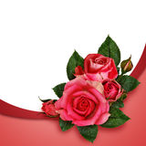 Pink rose flowers composition Royalty Free Stock Photography