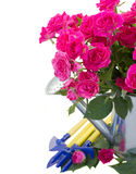 Pink rose  flowers with gardening tools. Pink rose  flowers in watering can with  gardening tools  isolated on white background Royalty Free Stock Photography