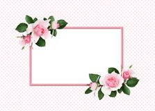 Pink rose flowers and green leaves in a floral corner arrangement and a frame. On polka dot background royalty free stock images