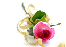 Pink rose flowers isolated on white. eustoma Royalty Free Stock Photography