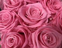 Bunch of pink roses. royalty free stock photos