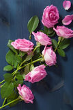 Pink rose flowers over dark blue background Stock Photo