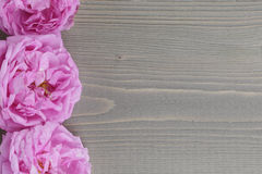 Pink rose flowers. On rustic wood table Royalty Free Stock Images