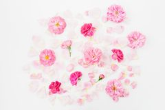 Pink rose flowers on white background. Flat lay, Top view. Flowers pattern texture. Pink rose flowers on white background. Flat lay, Top view royalty free stock images
