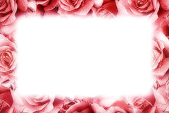 Pink rose frame Stock Photos