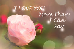 Pink rose in garden. Quote. I love you more than I can say. sweet dreamy , pink rose in garden with colorful Bokeh , soft focus Royalty Free Stock Image