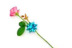 Pink rose with a gift bow Stock Photo
