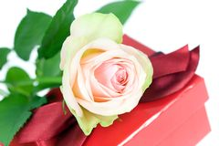 Pink rose and gift box. Royalty Free Stock Images