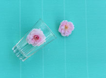 Pink rose in glass on green vintage background Stock Image