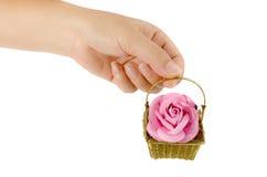 Pink rose in gold basket Stock Image