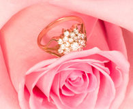pink rose with gold ring Stock Image