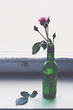 Pink rose in a green bottle on old wooden window sill. Pink rose in a green bottle on old wooden windowsill, home decor, interior details Royalty Free Stock Photography