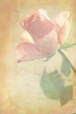 Pink rose grungy background Royalty Free Stock Images