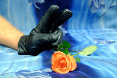 Pink rose and hand with a black glove showing victory symbol on a blue background Royalty Free Stock Image