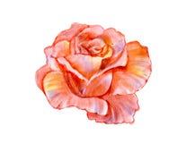 Pink rose hand illustration vector illustration