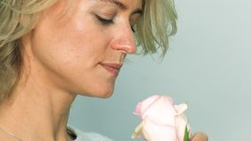Woman with pink rose. Pink rose in hands of pretty adult woman. The girl sniffs the flower stock footage