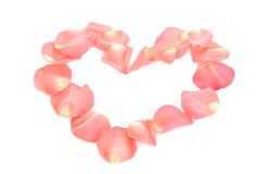 Pink rose heart royalty free stock photo
